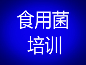 江苏省南京市食用菌培训基地(江苏省南京市食用菌培训班_江苏省南京市食用菌培训学校)哪里好?